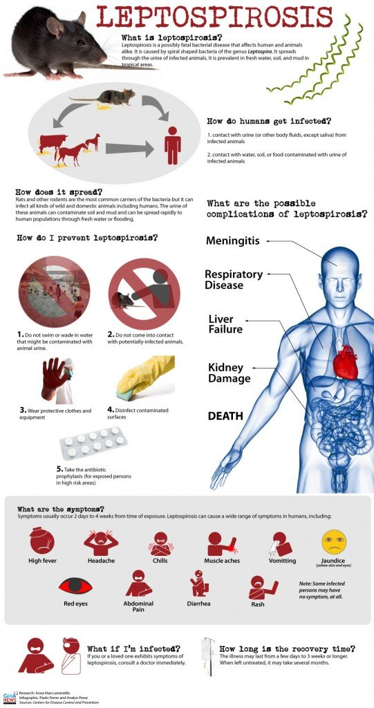 Leptospirosis | Ministry of Health and Medical Services
