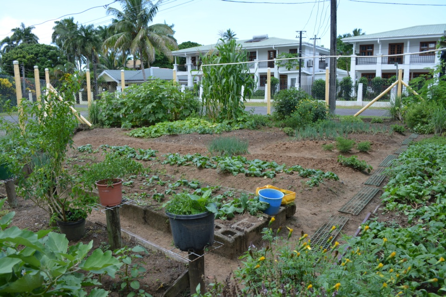 The Health Ministry Encourages The Public To Invest In Backyard Vegetable  Gardens Especially With The Prevalence Of Non Communicable Diseases Such As  ...